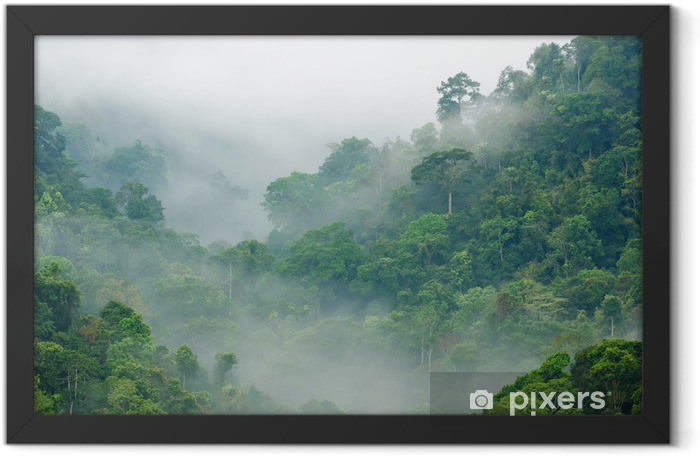 Plakat w ramie Poranna mgła w lesie tropikalnym - Tematy