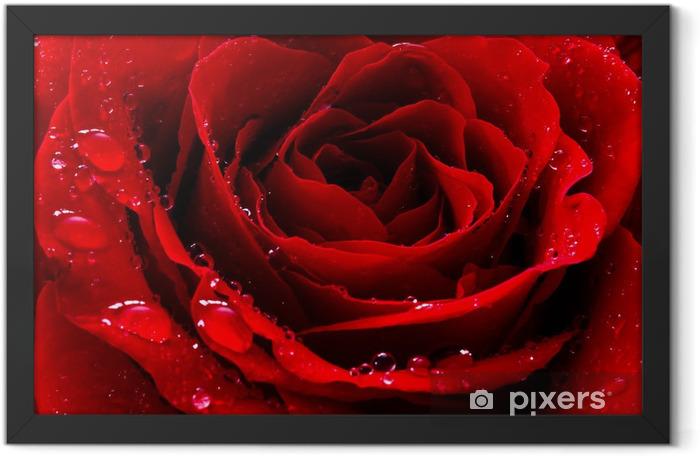 Plakat w ramie Czerwona róża z kropli wody - Tematy
