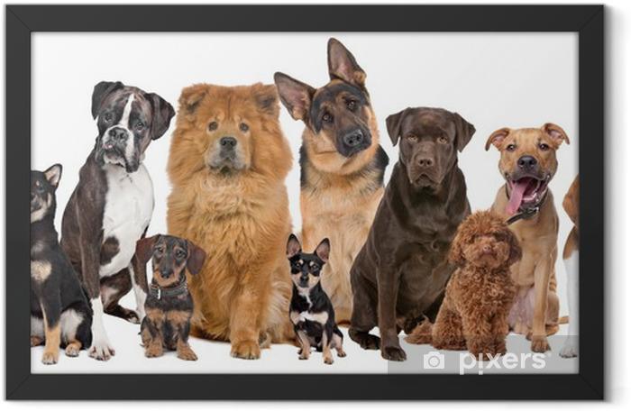 Plakat w ramie Grupa dwunastu psów - iStaging