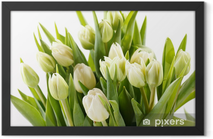Plakat w ramie Ładne tulipany - Tematy