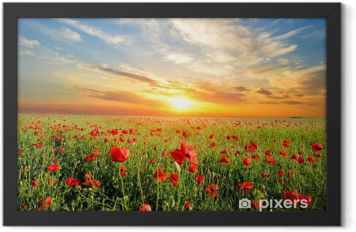 field with poppies Framed Poster - Themes
