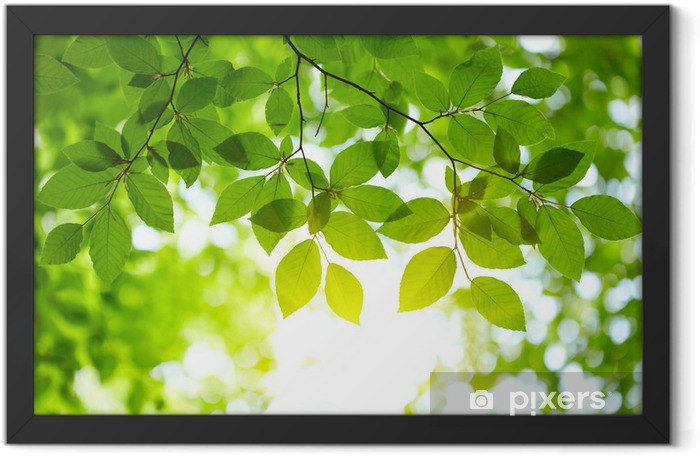 Green leaves background Framed Poster - iStaging