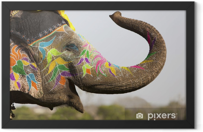 Decorated elephant at the elephant festival in Jaipur Framed Poster - Asia