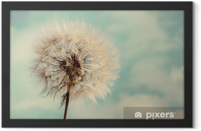 Dandelion Isolated on blue cloudscape Framed Poster - Themes