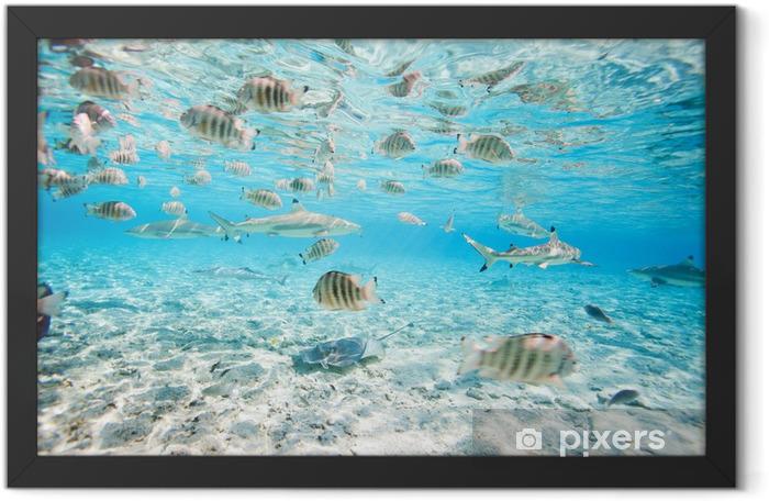 Bora Bora underwater Framed Poster - Fishes