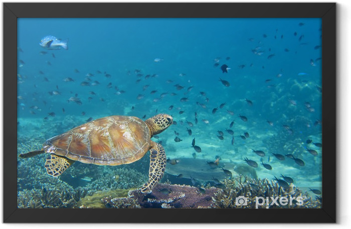 A sea Turtle portrait close up while looking at you Framed Poster - Fishes