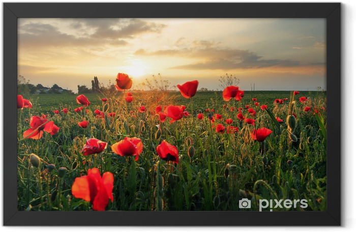 Poppies field flower on sunset Framed Poster - Themes