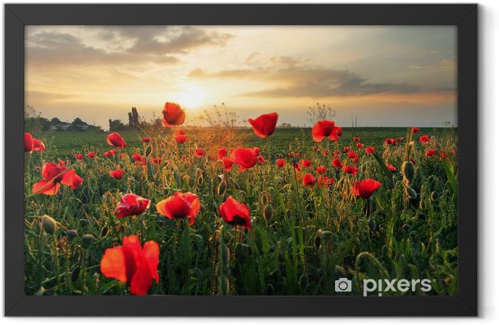 Plakat w ramie Kwiat pole maku na zachodzie słońca - Tematy