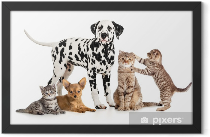 pets animals group collage for veterinary or petshop isolated Framed Poster - Wall decals