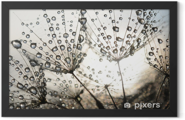 Dandelion seeds with dew drops Framed Poster - iStaging