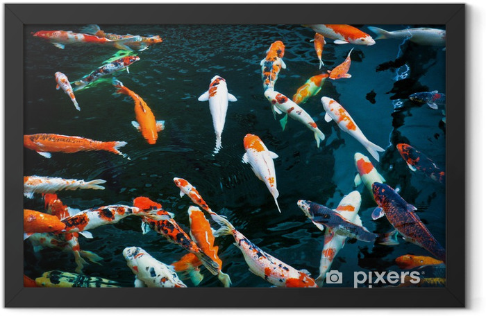 KOI FISH Framed Poster - Themes