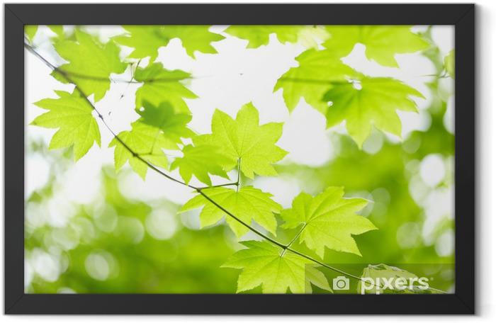 Green leaves Framed Poster - Themes