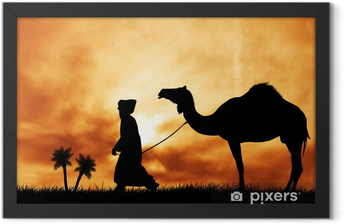 camel in the desert Framed Poster - Themes