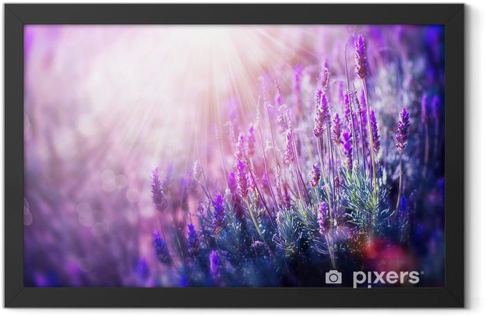Póster Enmarcado Campo de la lavanda Flores. Crecer y Florecer Lavender - Temas