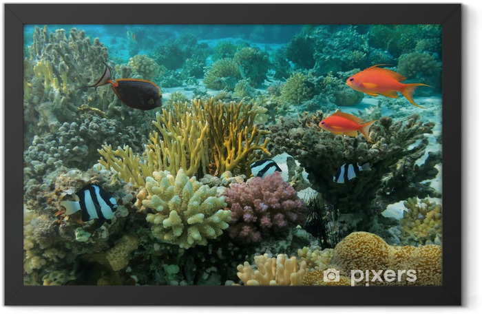 Tropical Fish and Coral Reef Framed Poster - Coral reef