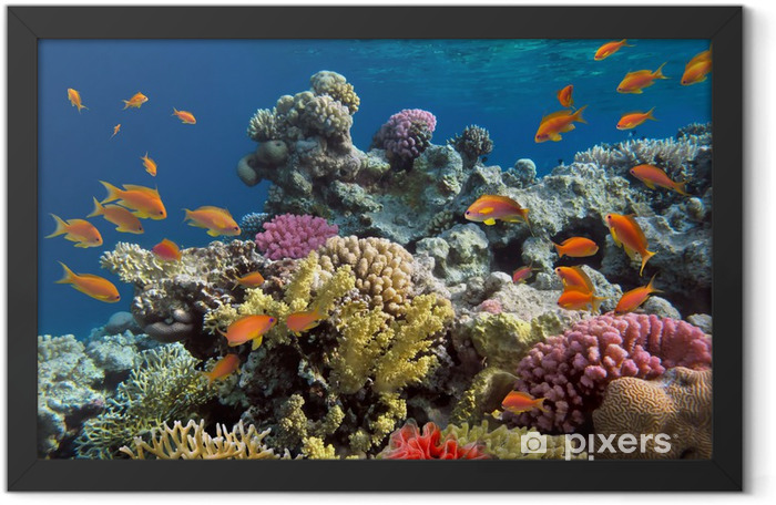 Underwater shoot of vivid coral reef with a fishes Framed Poster - Coral reef