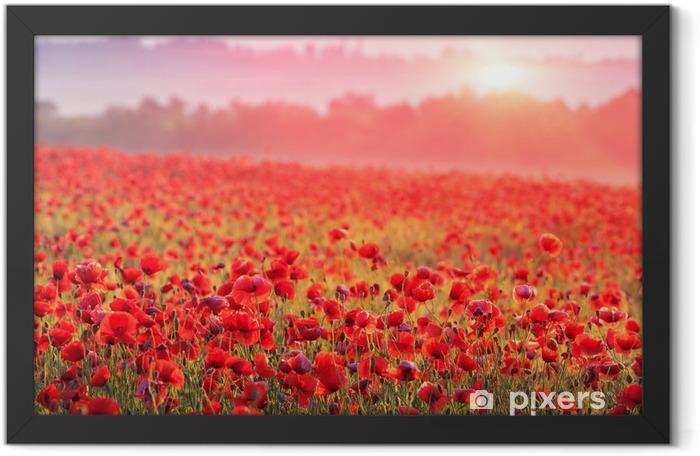 Plakat w ramie Pole makowe w porannej mgiełce - Łąki, pola i trawy