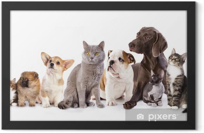 Poster en cadre Groupe de chats et de chiens en arrière-plan blanc, chat et chien - Sticker mural
