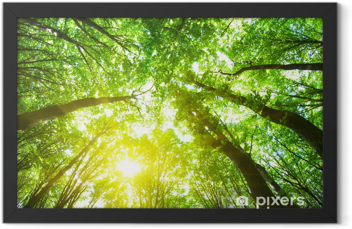 forest trees Framed Poster - Destinations