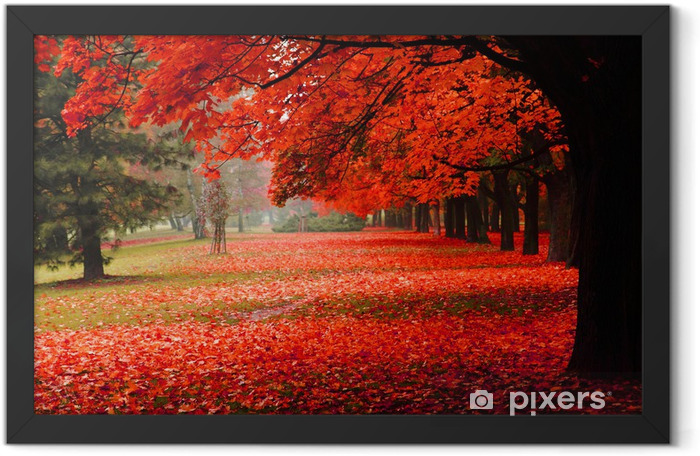 red autumn in the park Framed Poster - Destinations