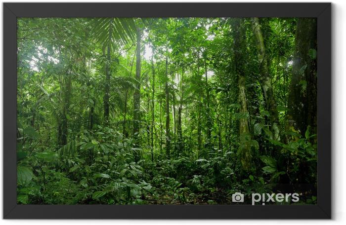 Plakat w ramie Tropikalne lasy deszczowe krajobraz, amazon - Tematy