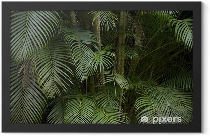 Dark Tropical Jungle Palm Frond Background Framed Poster - Brazil