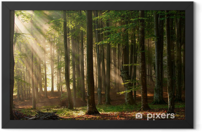 Sunbeams coming through the forest Framed Poster - Themes