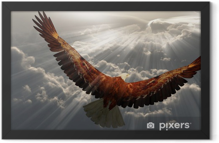 Eagle in flight above the clouds Framed Poster - Themes