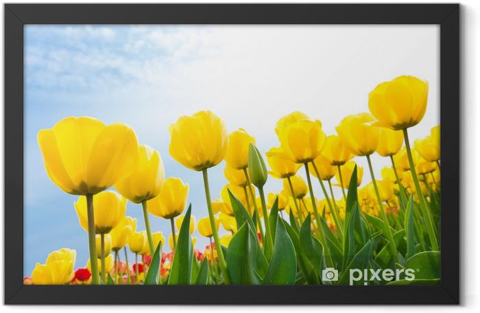 Plakat w ramie Żółte tulipany - Tematy