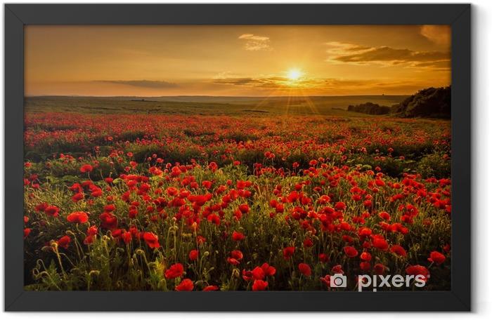 Plakat w ramie Pole makowe o zachodzie słońca - Łąki, pola i trawy