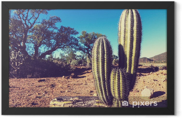 Cactus in Mexico Framed Poster - America