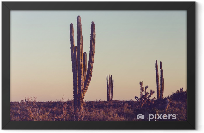 Cactus in Mexico Framed Poster - Nature and Wilderness