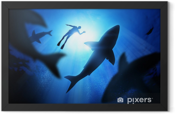 Diver And Great White Sharks Framed Poster - Water