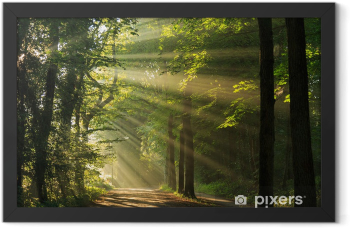 Sun rays shining through the forest Framed Poster - Themes