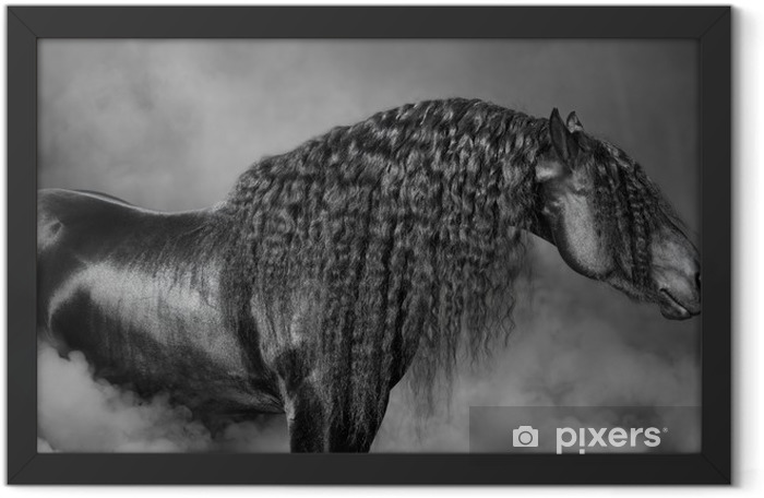 Portrait of black Frisian horse with long mane in the smoke Framed Poster - Prints and posters Horses