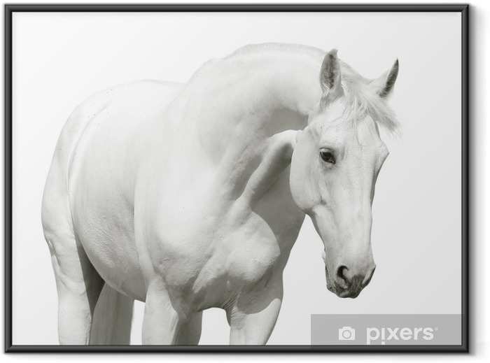white horse high key Framed Poster - Wall decals
