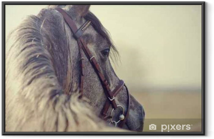 Portrait of a sports stallion Framed Poster - Animals