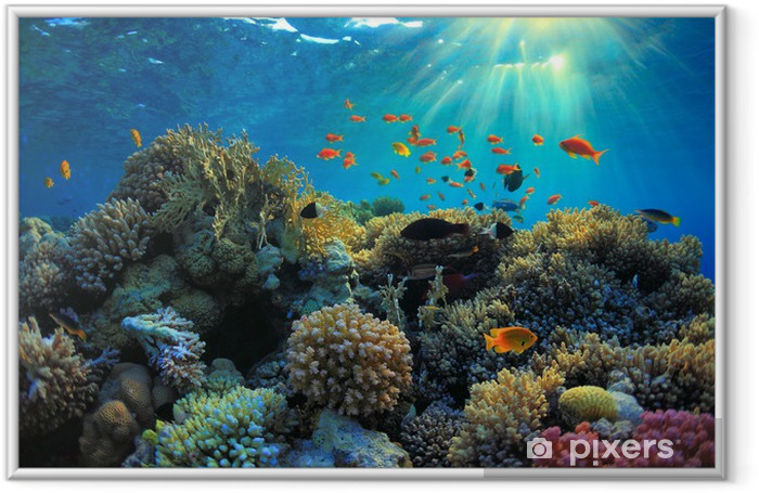 Underwater view Framed Poster - Themes