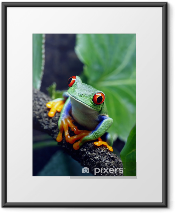 Red-Eyed Tree Frog Framed Poster - Frogs