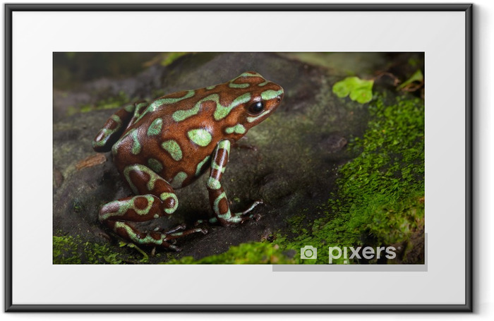 golden poison dart frog Framed Poster - Other Other