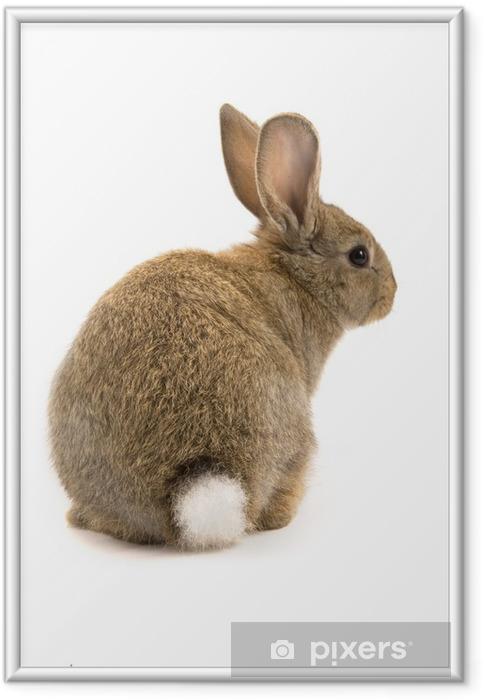 Plakat w ramie Adorable królik wyizolowanych na białym tle - Króliki