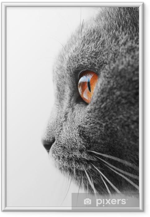 Poster in Cornice Britannico blu gatto dettaglio - Temi