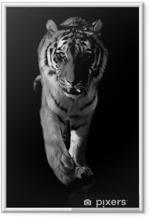 Poster en cadre Tigre noir et blanc - Thèmes