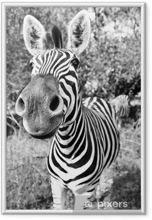 Plakat w ramie Zebra Pysk - Tematy