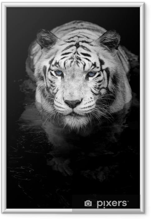 Plakat w ramie Biały tygrys - Style