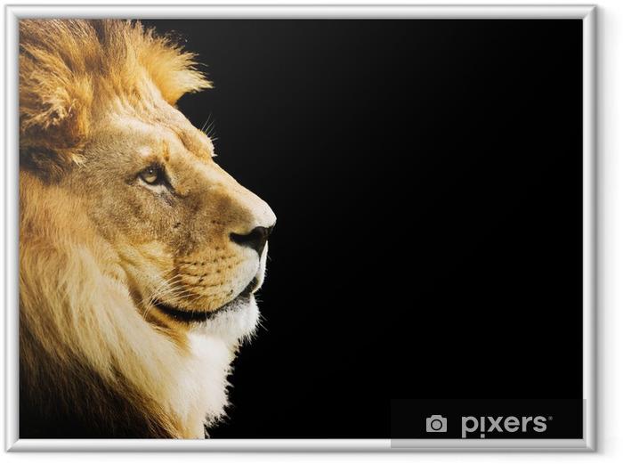 Plakat w ramie Portret lwa z przestrzeni kopii na czarnym tle - Tematy
