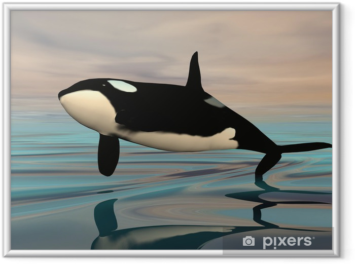 Tappaja valaan hyppy - 3d render Kehystetty juliste - Merenelävät