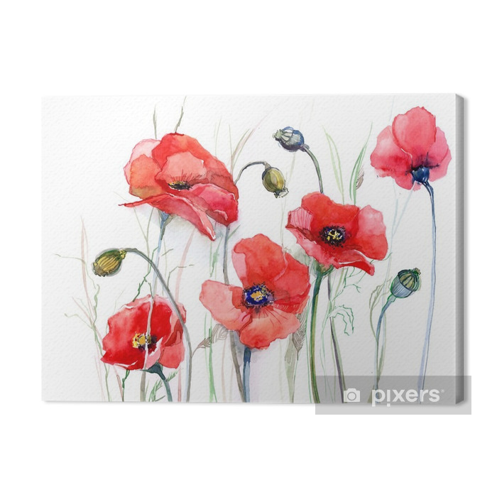 poppy Premium prints - Nature