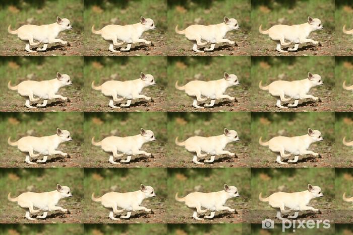 Vinylová tapeta na míru Samozřejmě du Chihuahua béžová de profil - Savci