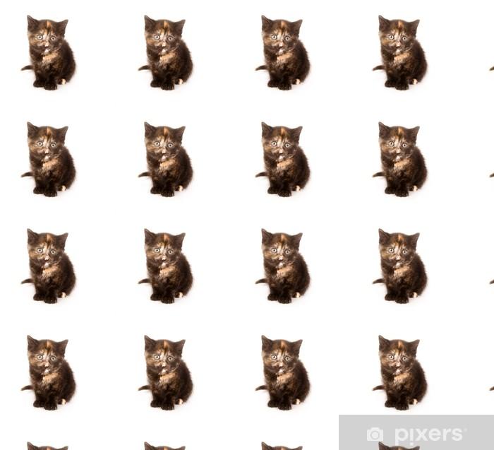 Papier peint vinyle sur mesure Un chaton tarte colorée que quelques étoiles semaines, est à la caméra - Mammifères
